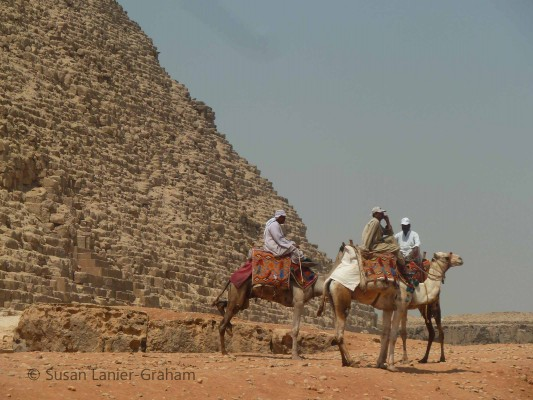 Camels at the Pyramid at Giza