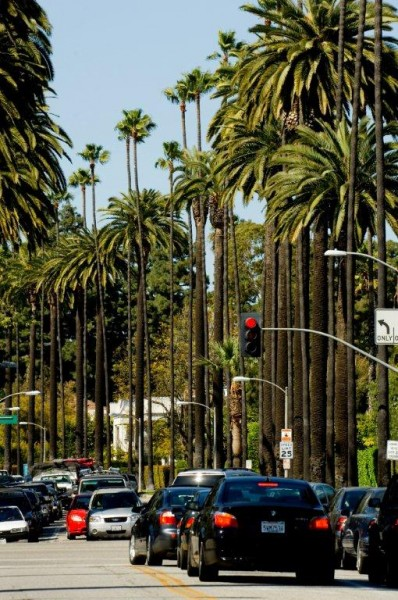 Palm tree lined street in Beverly Hills